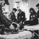 Dogs enjoying relaxing therapy