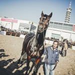 Varenne at Verona Horses Fair
