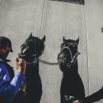 Verona's Horses Fair