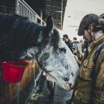 Verona Horses Fair